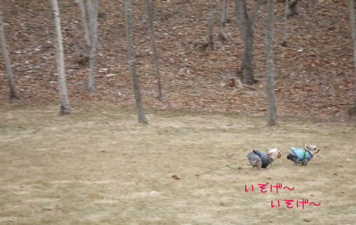 060323-haginosato2.jpg