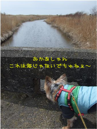 060410-umi2.jpg