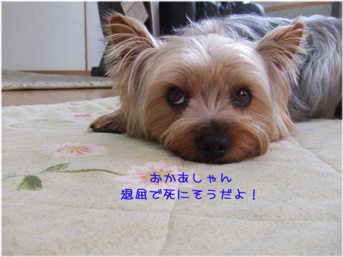060424-yuki2.jpg