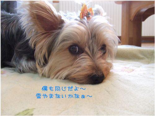060424-yuki3.jpg