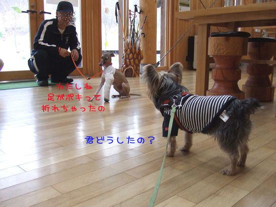 060430-haginosato2.jpg