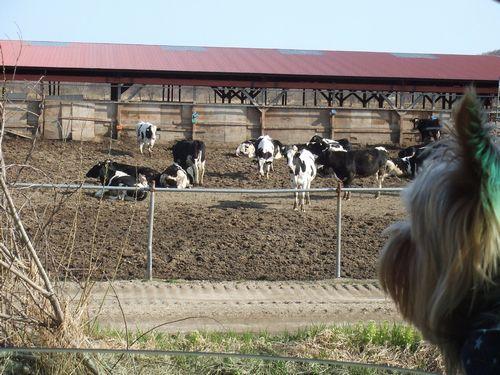060503-farm.jpg