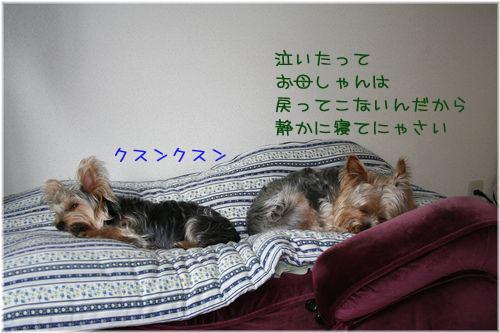 060514-orusuban1.jpg