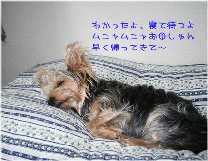 060514-orusuban2.jpg