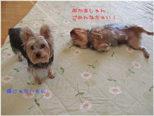 060515-itazura3.jpg