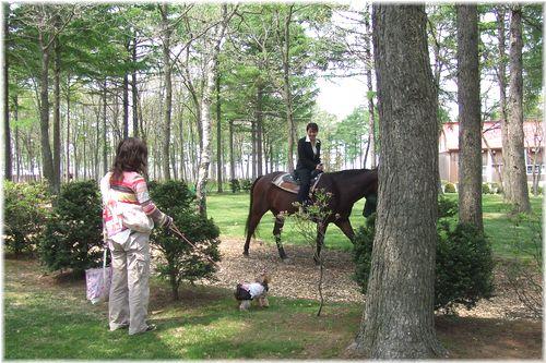 060526-horsepark9.jpg