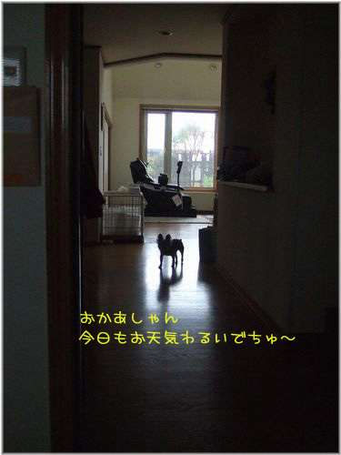 060529-ie1.jpg
