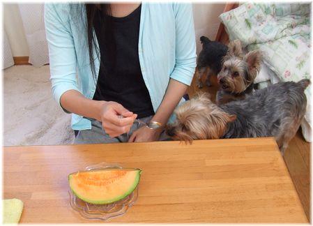 060629-melon.jpg