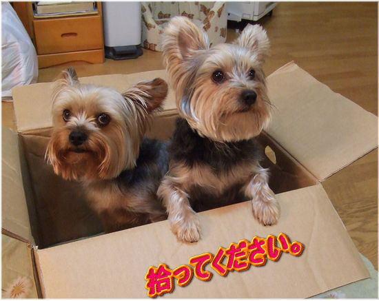 060707-box-k.jpg