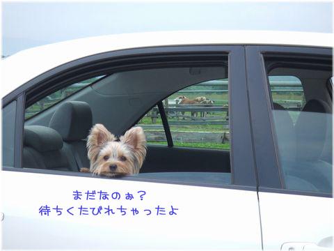 060713-bokujyou2.jpg