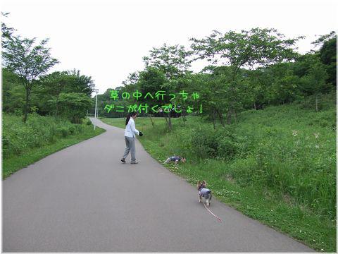 060713-bokujyou6.jpg
