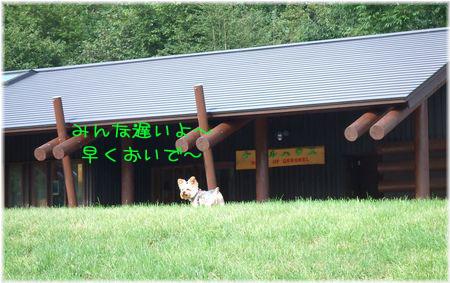 060905-hainosato1.jpg