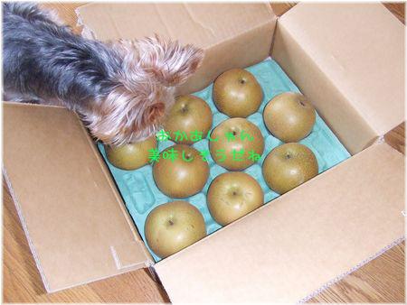 060909-fruit.jpg