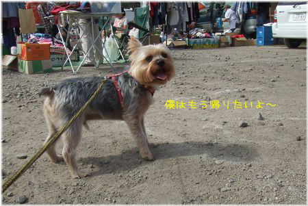 060917-furima4.jpg