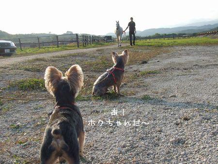 061004-bokujyou2.jpg