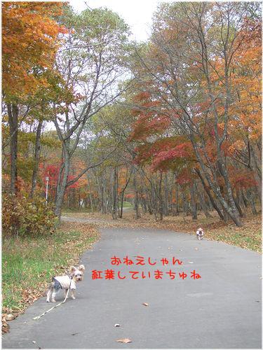 061031-kouyou2.jpg