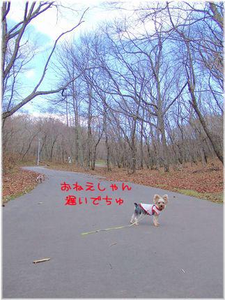 061112-haginosato1.jpg