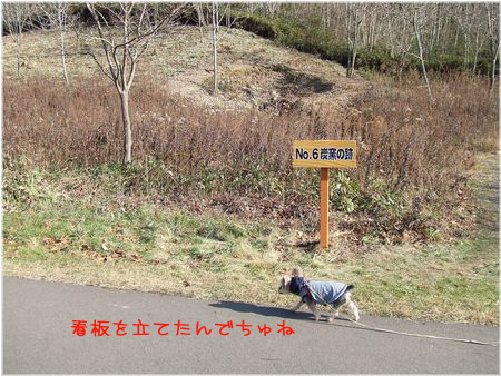 061119-sanpo1.jpg