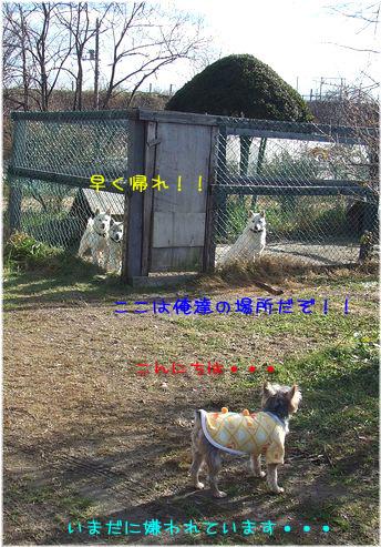 061124-hayaku3.jpg