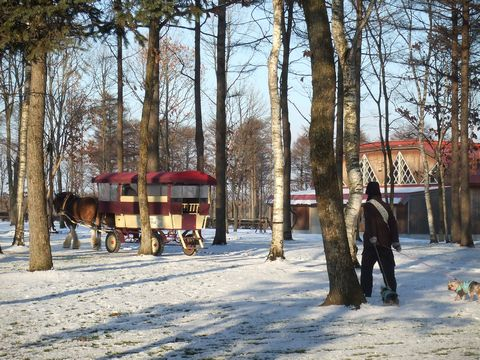 061208-northern-horse2.jpg