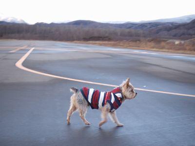 070107-dogrun1.jpg