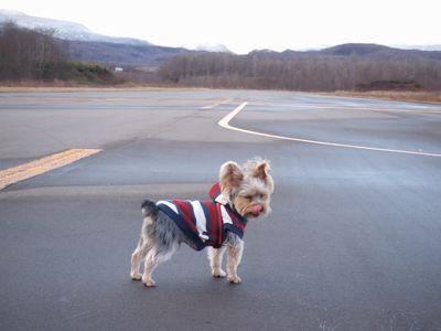 070107-dogrun2.jpg