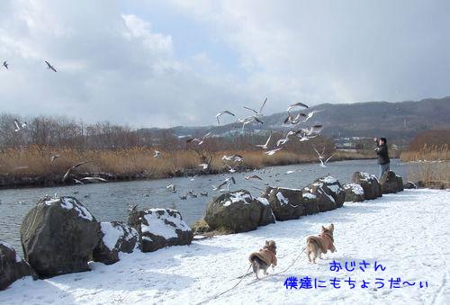 070119-swan3.jpg