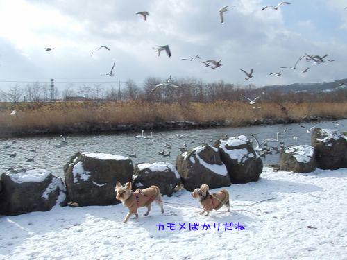 070119-swan4.jpg