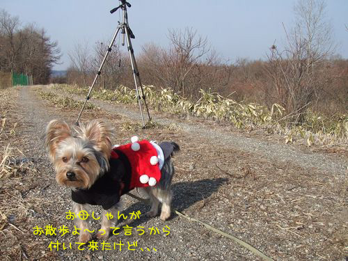 070126-wasi1.jpg