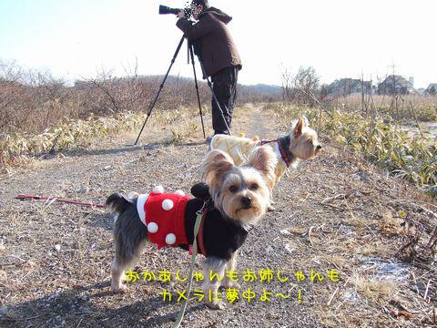 070126-wasi2.jpg