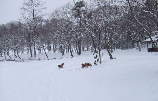 070127-jinya-yuki1.jpg