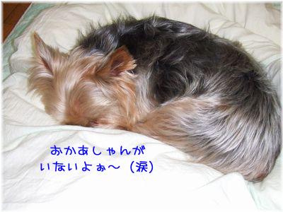 070130-baibai4.jpg