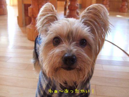 070208-bokujyou7.jpg