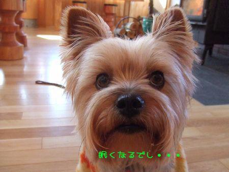 070208-bokujyou8.jpg