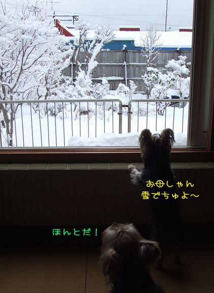 070211-niwa1.jpg