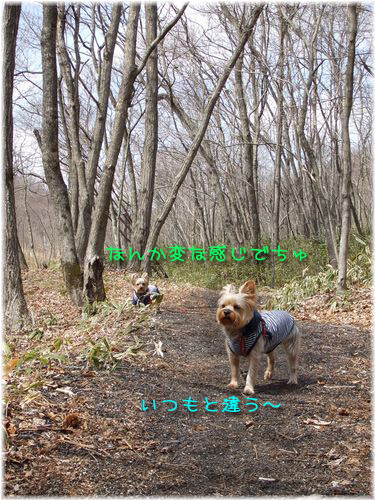 070406-sanpo5.jpg