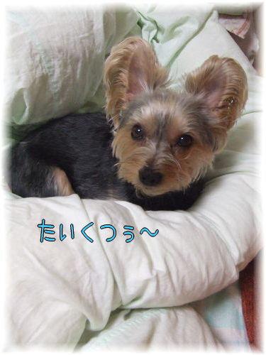 070502-ryou.jpg