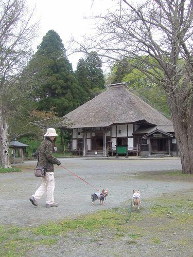 070512-zenkouji2.jpg