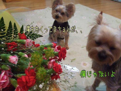 070513-hahanohi2.jpg