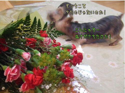 070513-hahanohi3.jpg
