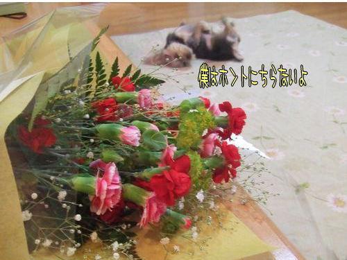 070513-hahanohi4.jpg