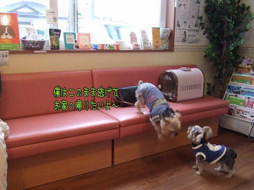 070614-haginosato8.jpg