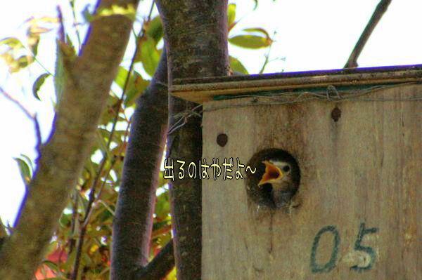 070616-komukudori7.jpg