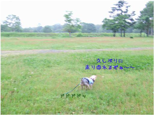 070621-jinya1.jpg