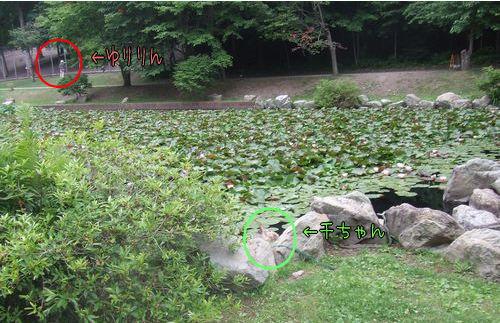 070711-sika-park11-k.jpg