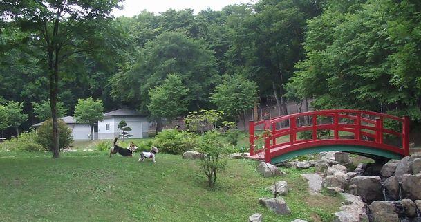 070711-sika-park5.jpg