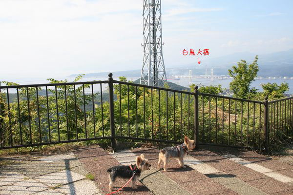 070726-zenkouji5.jpg