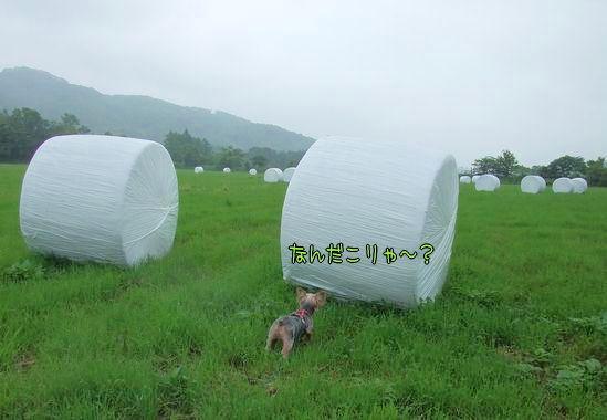 070811-morino5.jpg