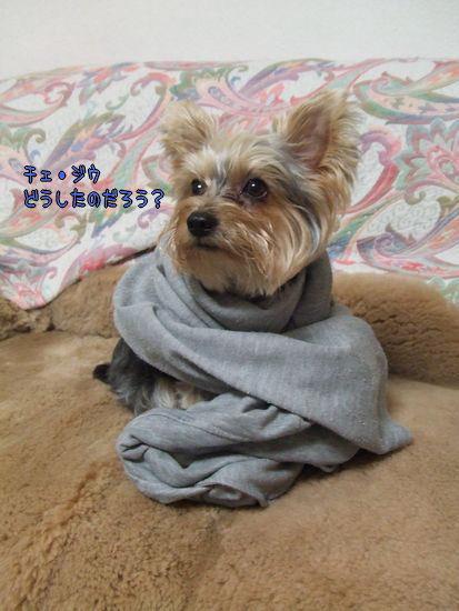 071005-yonsama1.jpg