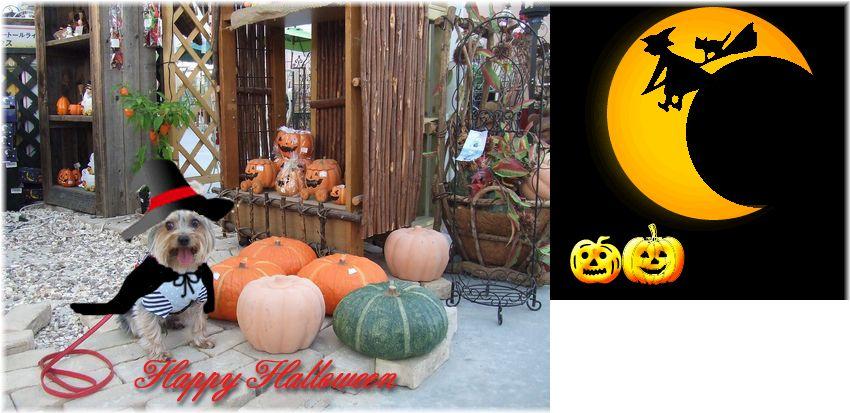 071031-halloween2.jpg